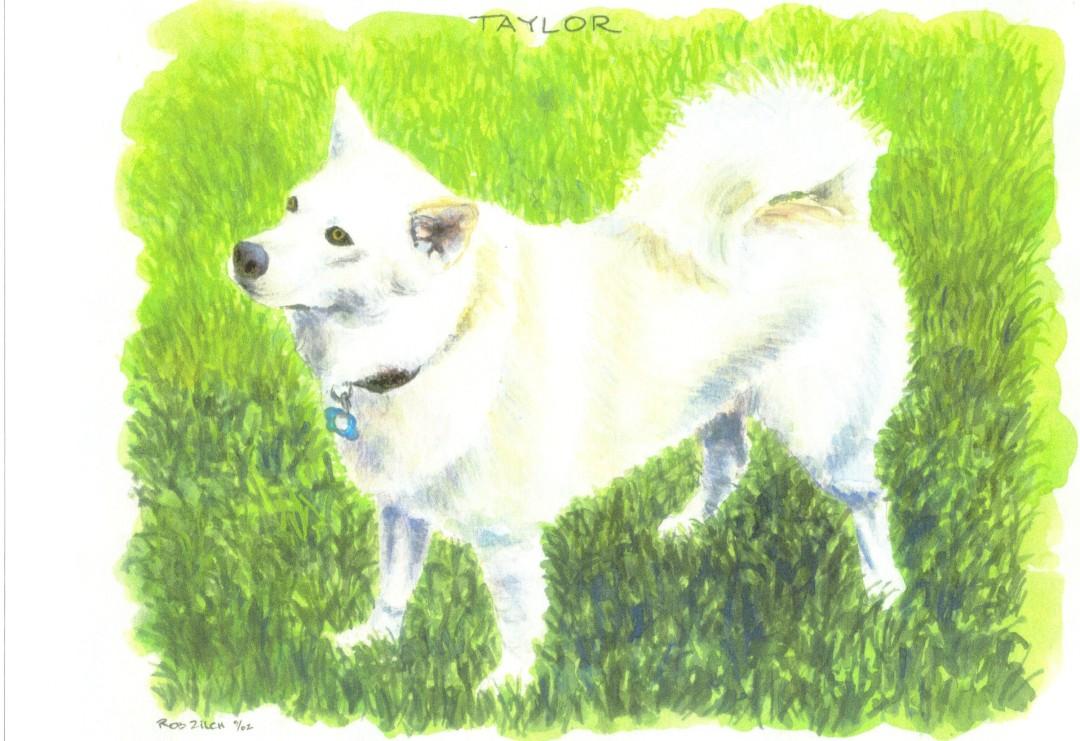 Taylor Dog